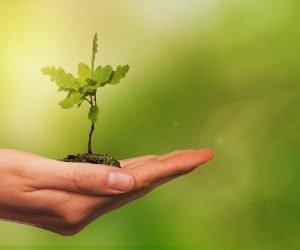 O que os órgãos ambientais realizam?