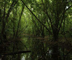 Curiosidades no ramo de meio ambiente