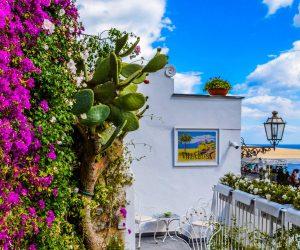 Tipos de jardins verticais e suas vantagens