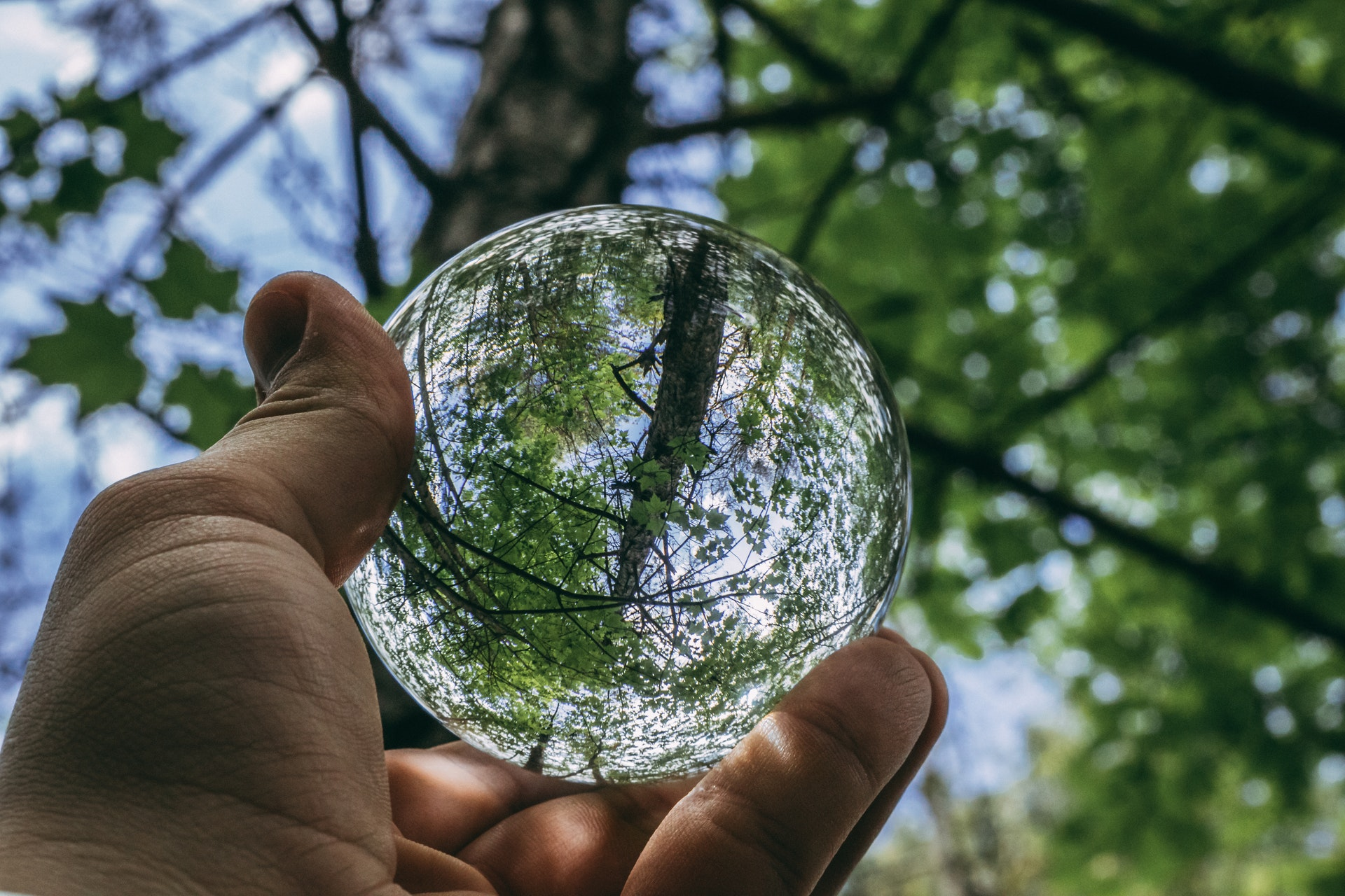 Serviços relacionado ao meio ambiente que você precisa conhecer