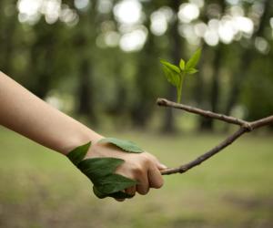 Laudo Técnico Ambiental e outras avaliações