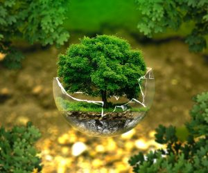 A relevância dos trabalhos para preservação ambiental