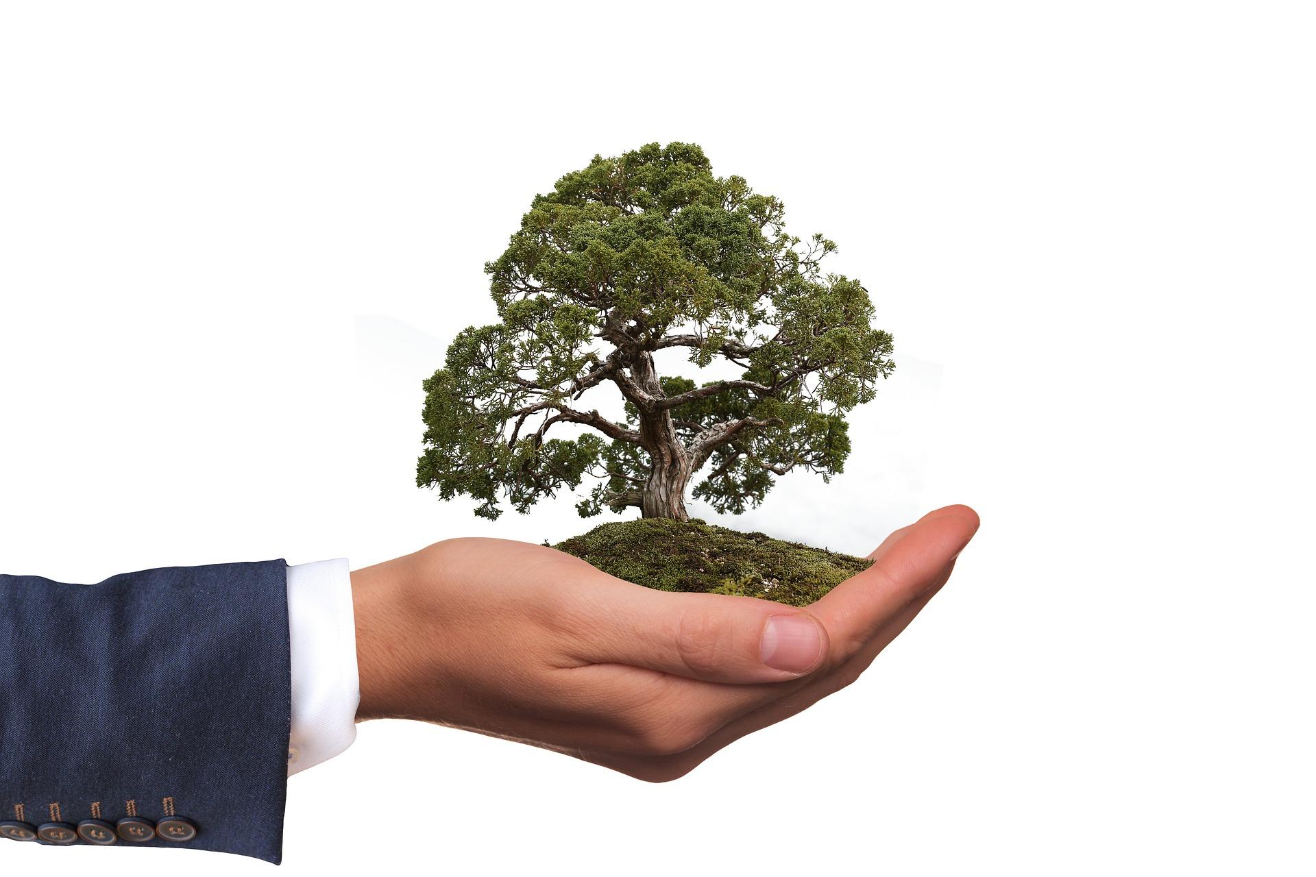 Processos que ajudam na preservação do meio ambiente