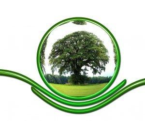 Saiba a importância responsabilidade ambiental