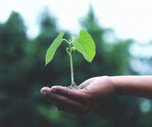 Como implementar um sistema de gestão ambiental na sua empresa?