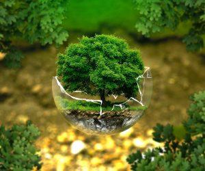 5 Práticas para a conservação do meio ambiente