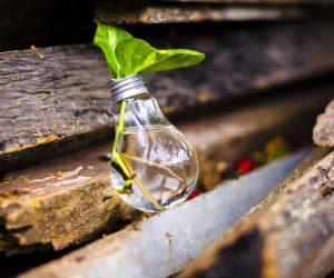 A importância dos cuidados diários com o meio ambiente