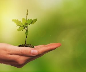 O papel do licenciamento e dos cuidados com o meio ambiente