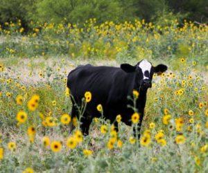 Produtores rurais seguem legislação ambiental vigente