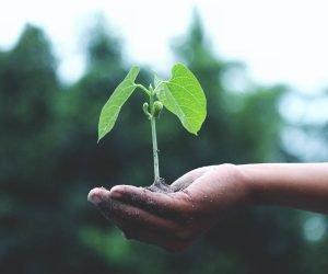 A gestão do meio ambiente nas empresas