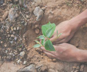 Como cuidar do nosso planeta