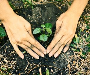 Detalhes importantes do ramo de meio ambiente