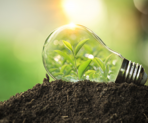 Saiba mais sobre a importância da gestão ambiental