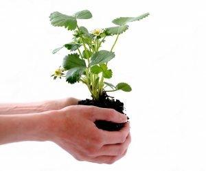 Licenças ambientais tornam a economia verde uma nova realidade