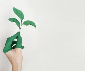 Por onde começa a educação ambiental?