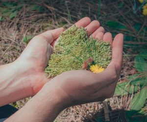O que são as práticas de sustentabilidade?
