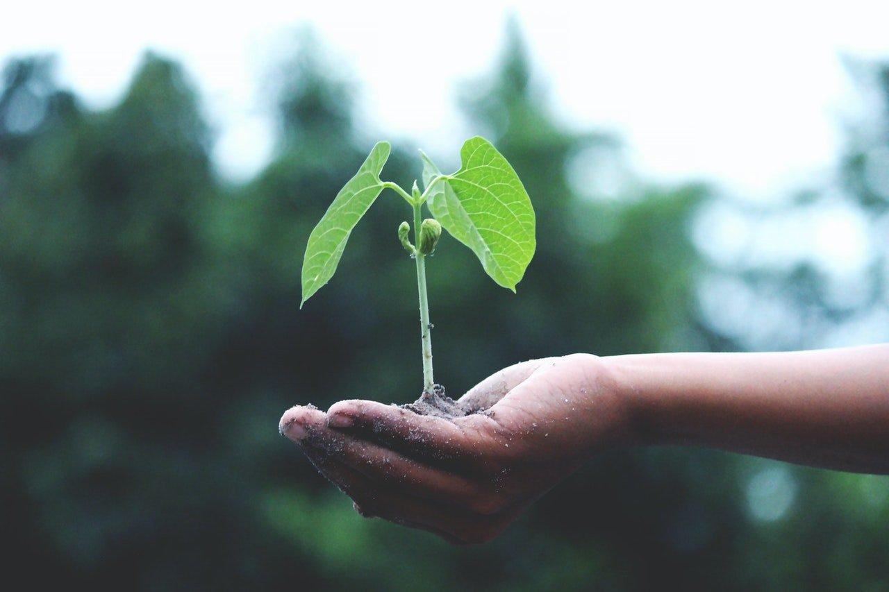 Educação ambiental e cidadania: qual a relação?