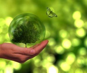 A relevância de produtos e serviços para cuidar do ambiente
