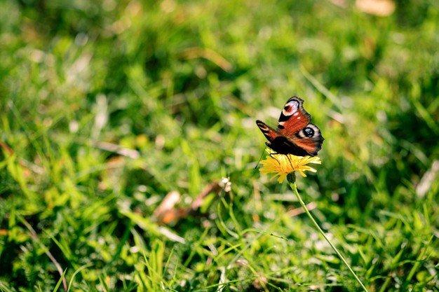 Como o meio ambiente pode afetar a saúde?