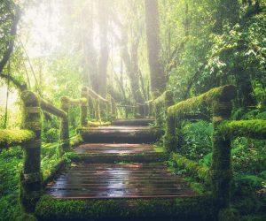 O papel do licenciamento ambiental e dos cuidados com os solos