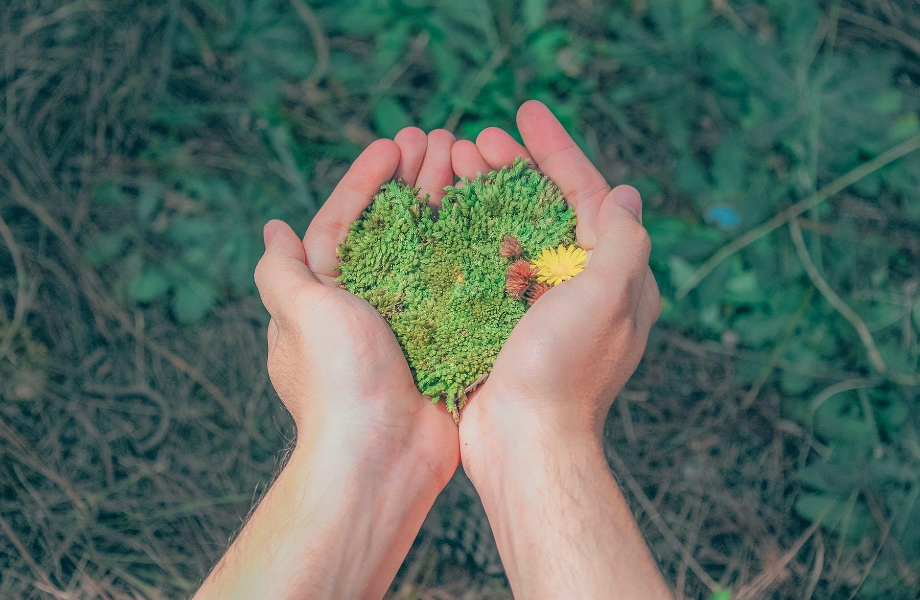 A importância dos serviços de cuidado com o ambiente