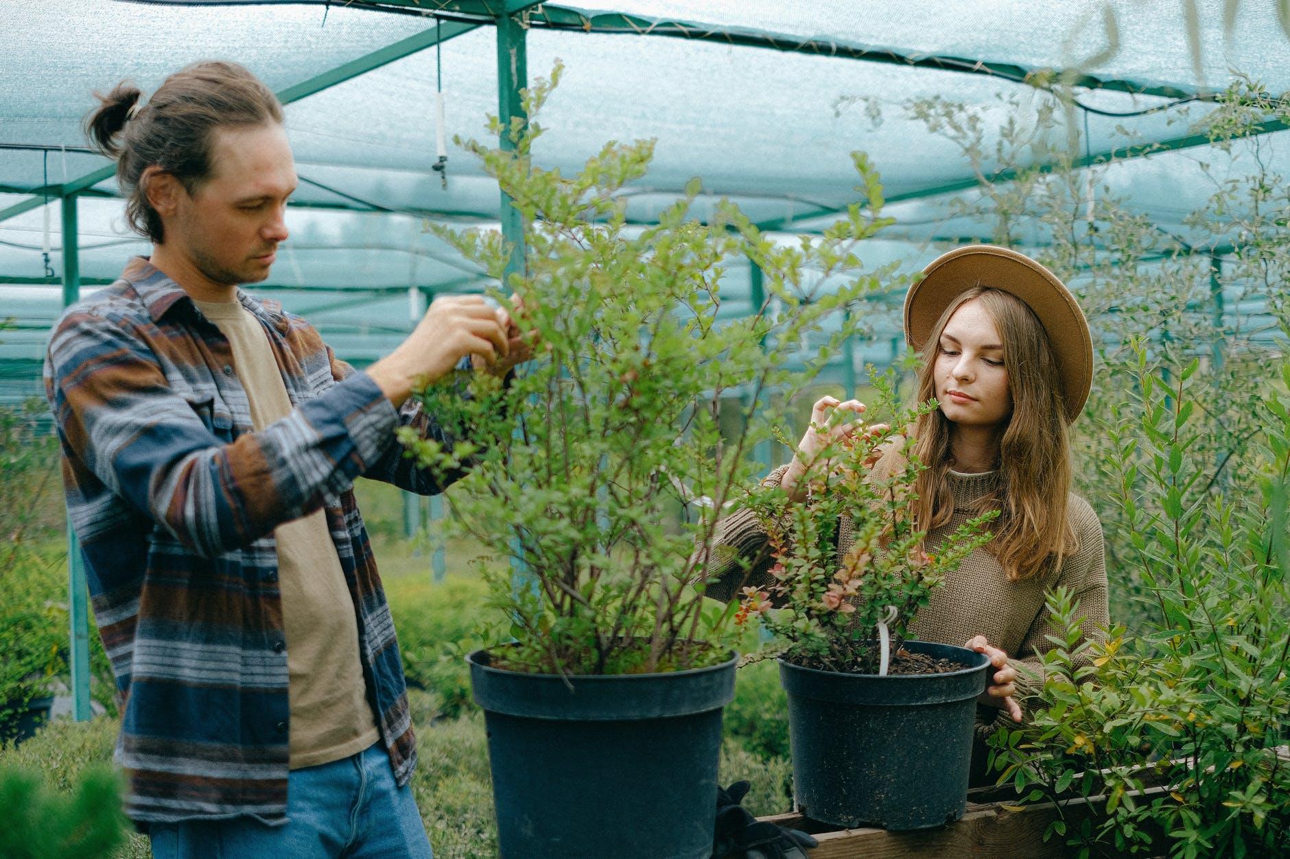 Cuidados ambientais na montagem de plantios