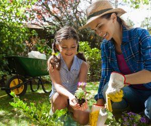 Jardinagem de flores e como você pode deixar seu jardim mais bonito