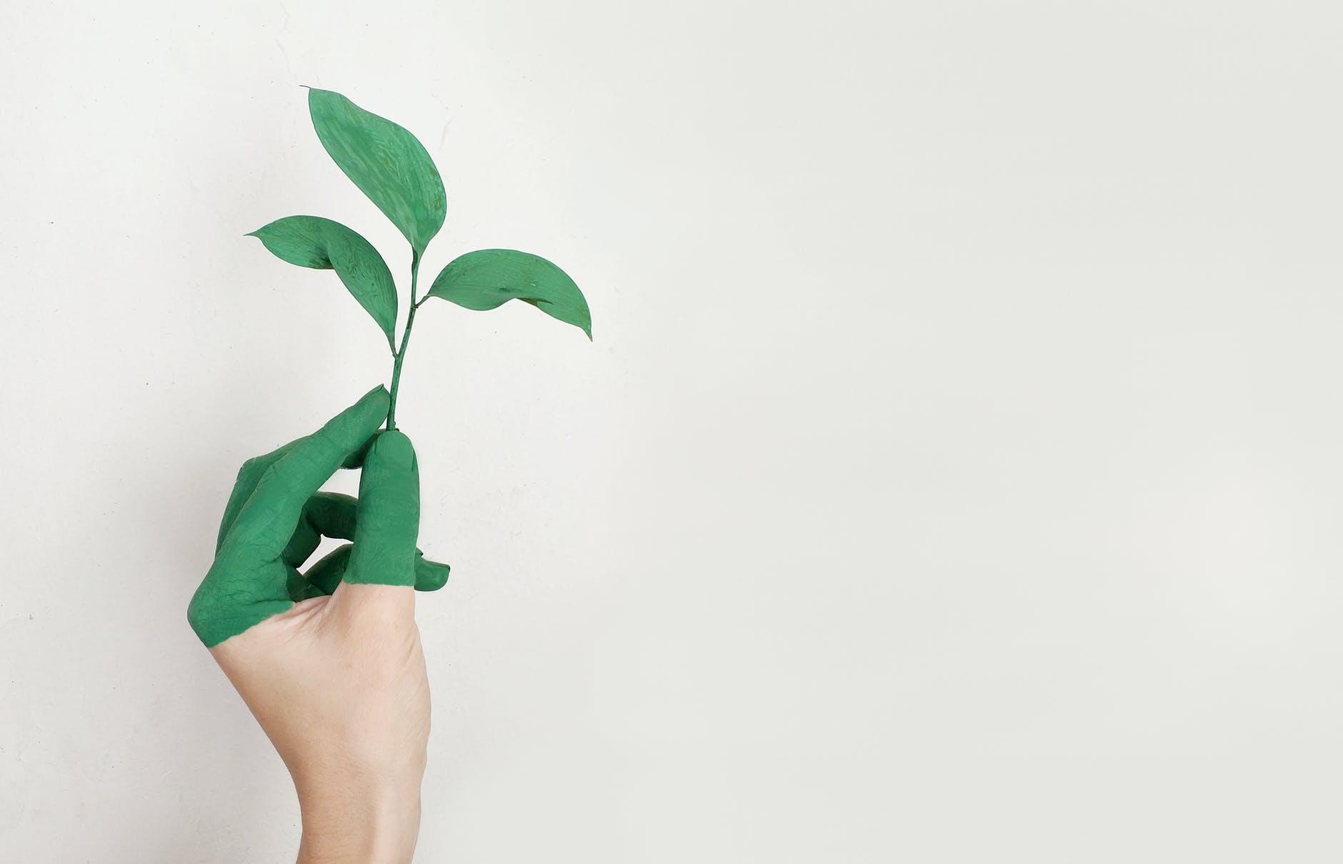 Ações para a preservação do meio ambiente