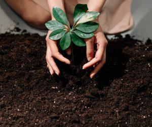 A relevância de cuidados específicos para o meio ambiente