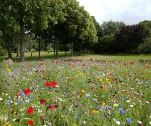 Procedimentos e cuidados para a preservação ambiental