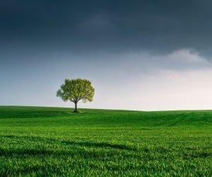 Dicas simples de preservação ambiental